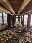 Scorpion Pier